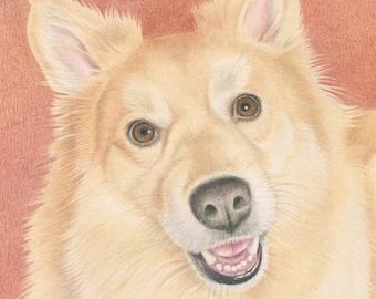 Custom Pet Portrait, Colored Pencil Pet Portrait, Dog Portrait, Original, Hand Drawn Art from your Photo