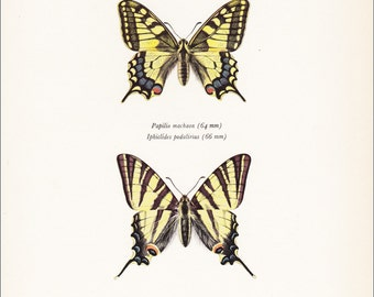 vintage butterfly insect art print Swallowtail European butterflies yellow wings Papilio machaon  home decor 8x10 inches