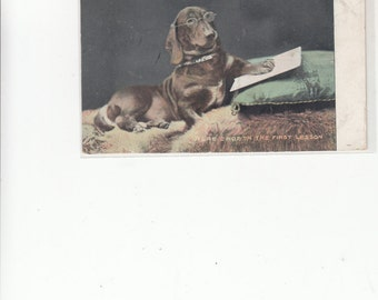 Here Endeth The First Lesson Dachshund? Wearing Spectacles Teaching ?/Studying? Dog Postcard