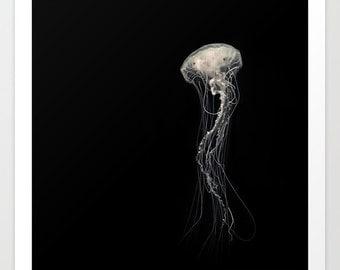 Medusa III Jellyfish Photography Print