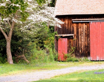 Spring Barn | Matted Print