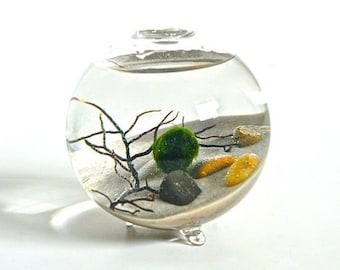 Marimo Moss Ball Globe Aquatic Terrarium/ Several  Colors Available