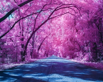The Road to Fall | landscape, fine art, wall decor, photography, Country roads, Infrared, Surreal