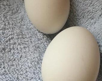 Hand Blown Duck Eggs