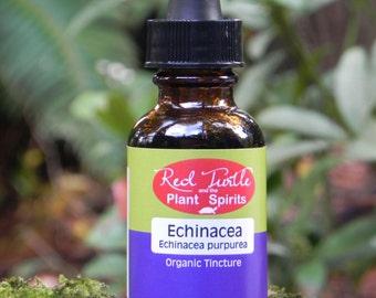 Echinacea Tincture, Organic (Echinacea purpurea)