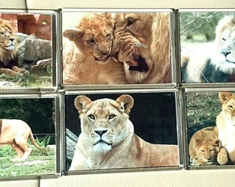 Lion/ Lioness Fridge Magnet, Set of 6/ Refrigerator Magnets / Kitchen Decor