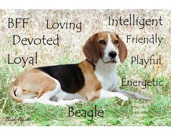Beagle, Beagle Art Print, Beagle Traits, Beagle Gift, Beagle Metal Art Print