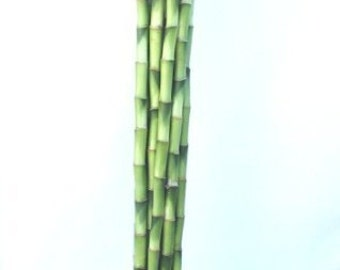 10 Stalks of 18 Inches Straight Lucky Bamboo (FREE SHIPPING)