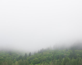 """Misty Mountain Photograph - Fog Spring Green Trees Pacific Northwest Nature Art """"Misty Green"""""""