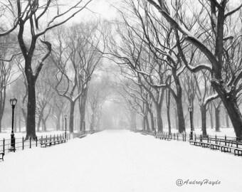 Snow Scene Central Park