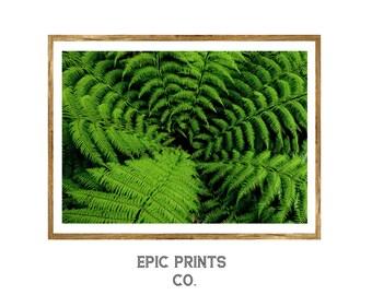 Green Fern Wall Art, Nature Botanical Print Set, Botanical Art, Botanical Illustration, Botanical Vintage Art, Fern Art, Fern Print
