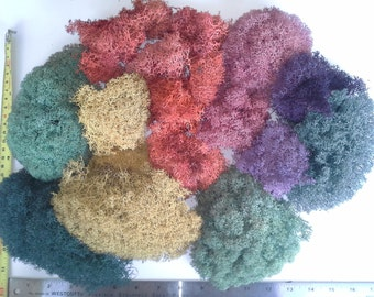 Reindeer Lichen,ASSORTMENT #A-5 colors, 5+ oz, Moss, PRESERVED Soft, handmade, locally harvested