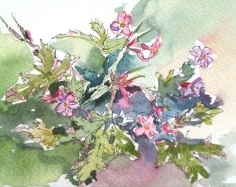 Watercolour postcard painting, Impressionist art, watercolour wildflower painting of Herb Robert, pink wild geranium flowers, 6x4 in