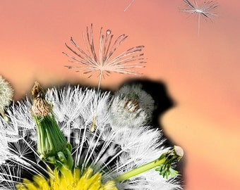 Dandelion Print,Flower Photography,Dandelion Photography,Dandelion Flower Decor,Dandelion Wall Art,Dandelion Art,Art Photograph of Dandelion