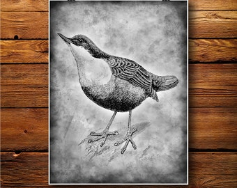 Finch Poster, Swallow Print, Martlet Decor, Bird Illustration BW337
