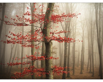 PO2426 Poster Print Red tree in misty forest Landscape Art