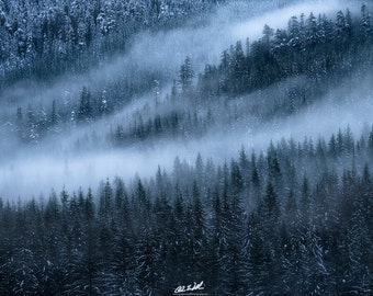 Winter's Embrace, winter, snow, trees, fog, foggy, wall art, washington, snoqualmie pass, mountains, cold, holidays,