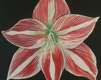 amaryllis painting flower painting floral