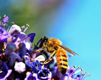 Honey Bee ~ Print