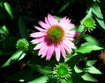Nature Photography Lovely Fuschia Flower Print