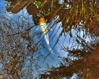Koi on a lazy afternoon,fish,card,