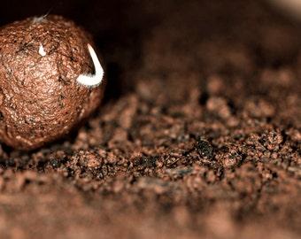 DIY Seed Bomb Mix - Makes 500+