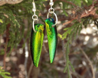 Beetle Shell Earrings // Beetle Elytra Jewelry // Insect Jewelry // Unique Gifts // Nature Lover