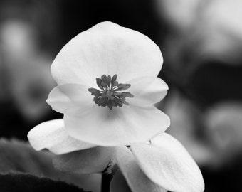 Black & White Flower 1 photograph