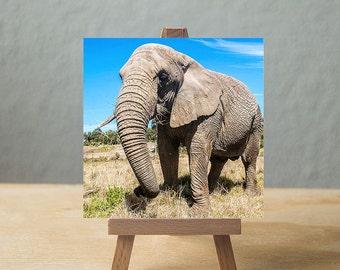 SALE - Elephant