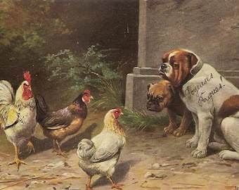 Carte Postale. Bull dogs and chickens
