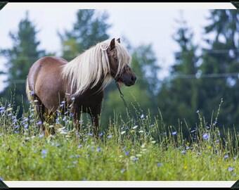 Set of 4 Horse Photographs, Fine Art Photography, 5x7 Photo Cards, Home Décor