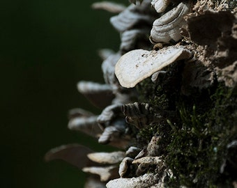 "Fine Art Nature Landscape Photography - ""Fungal Spine"""
