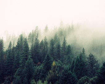 Misty Forest - Foggy - Forest - Forest Photo - Forest Landscape - Digital Photo - Digital Download - Instant Download - Fine Art Photography