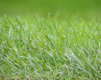 Green Grass - Meadow - Pasture - Green Grass Photo - Green - Green Color - Digital Photo - Digital Download - Instant Download - Green Decor
