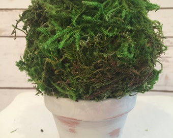 Green moss topiary