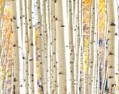 Aspen Grove, Aspen Trees, Wall Art, Fine Art, Photography, Landscape, Nature, Decor