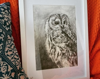 The Barred Owl ~ Pencil