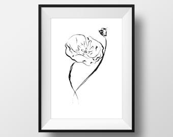 Black & White poppy