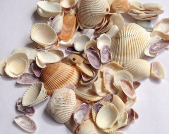 Shells for crafts or disply, small to medium, variety of color and kinds CLEAN NO ODOR