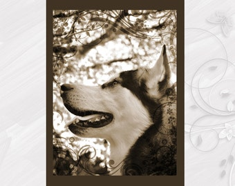 "Post card greeting card ""Alaskan Malamute"" dog - [# GK. 2012.033]"