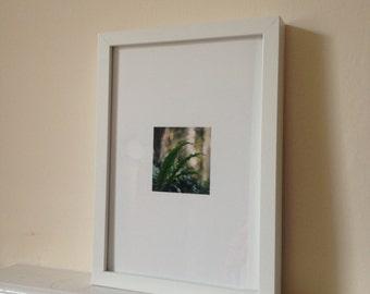 Frame fine art photograph - green leaves