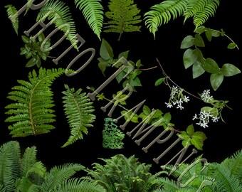 Plant Overlays