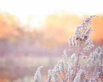 Sunset Flower Cluster Field Photo Print, Fine Art Photography