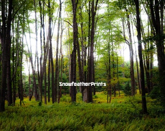 Enchanted Fern Forest - Ships Free