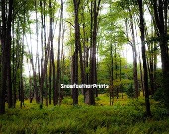 Enchanted Fern Forest