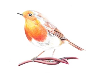 Robin Illustrated Print