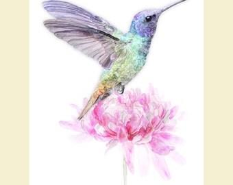 Hummingbird, Watercolor Humming bird print, hummingbird on flower, floral humming bird wall art