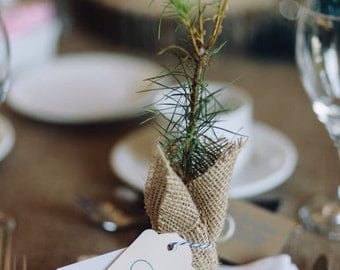White pine or spruce seedlings wrapped in burlap with custom tag