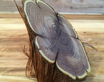 3 1/4x5x4 inch  Greasewood Oiled Angle Wood Slice