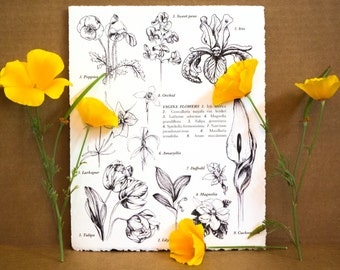 Vagina Flowers, Drawing, 8x10